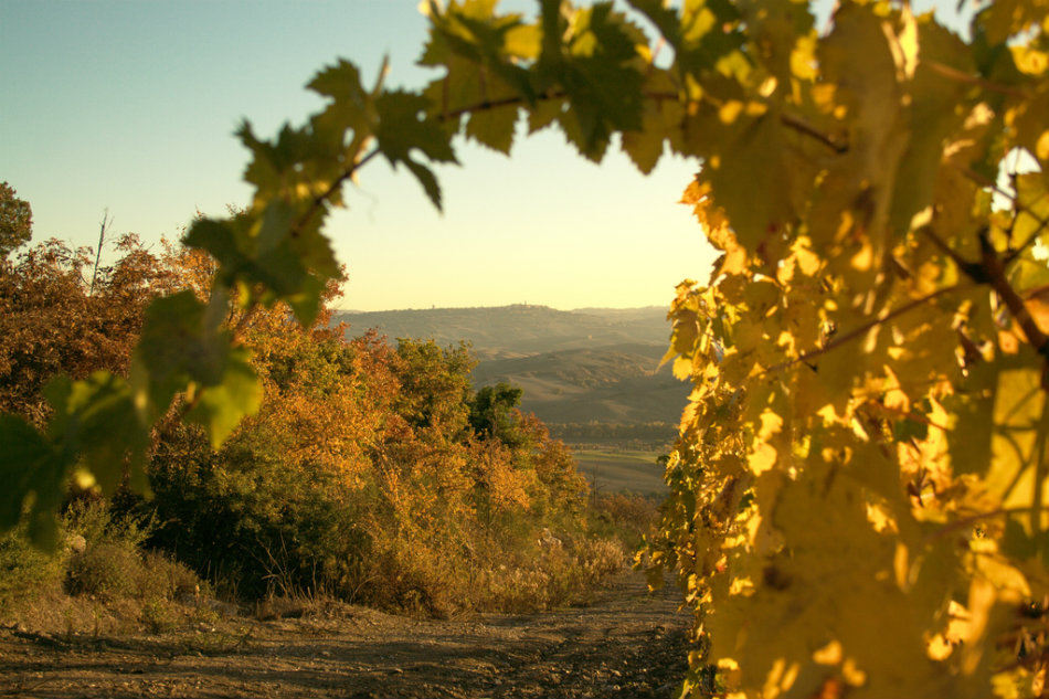 Autumn in Tuscany. Photo by Monja, CC