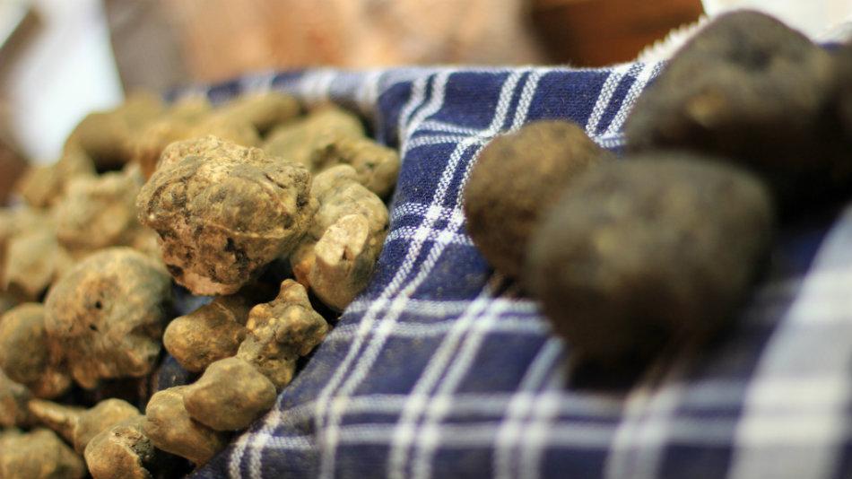 White Truffle of San Miniato. Photo from Michela Simoncini, CC