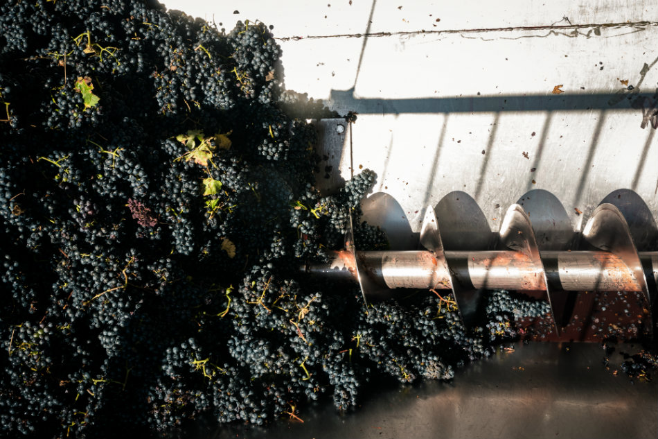 viticcio-harvest-2016-4