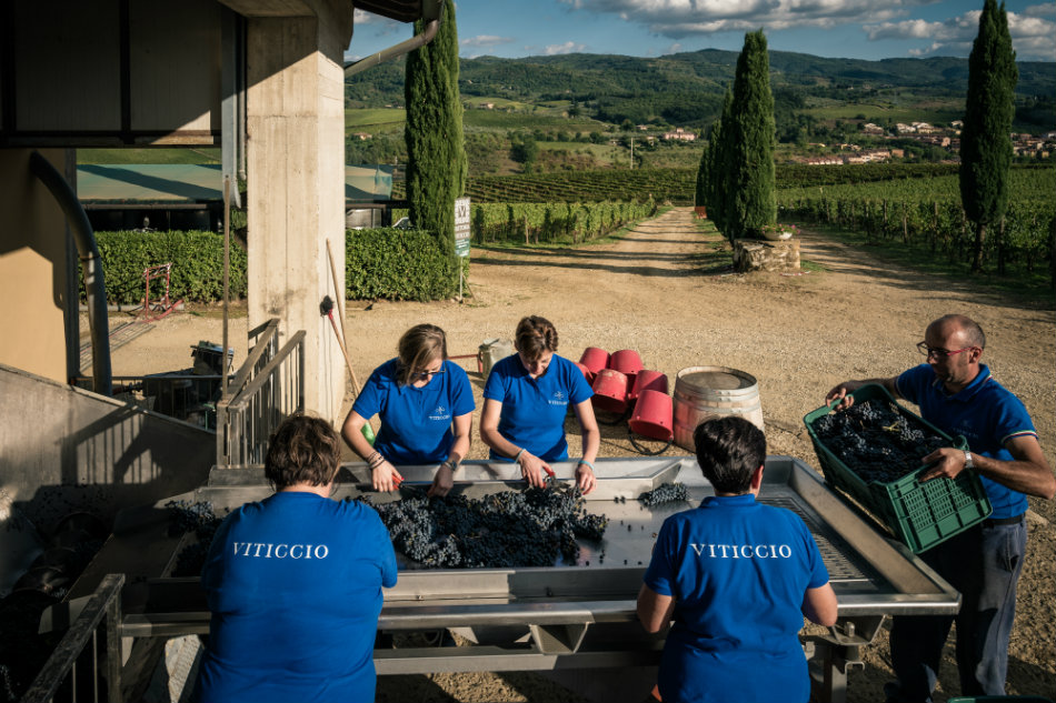 viticcio-harvest-2016-3