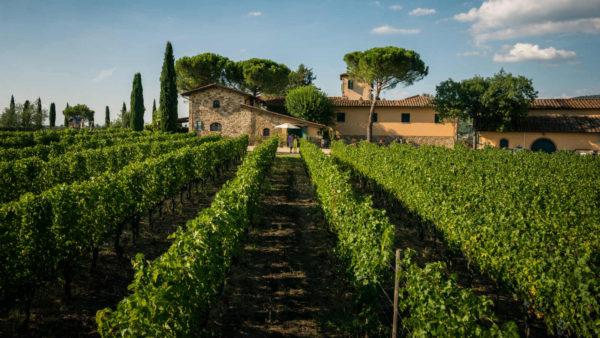 viticcio-organic-biodynamic
