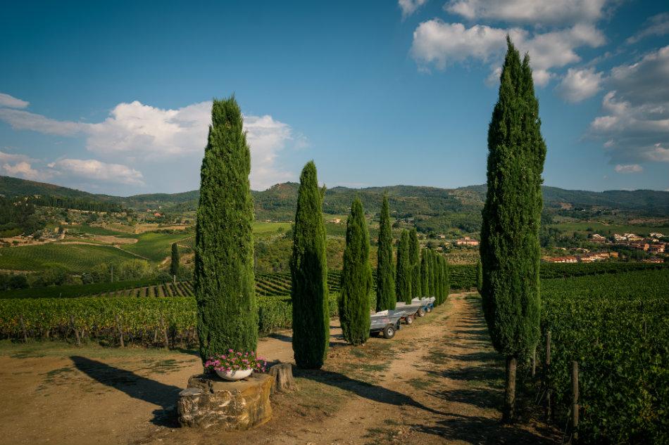 Viticcio's property in Chianti Classico
