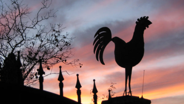 Black rooster, gallo nero, of Chianti Classico seen in Tuscany. Photo by To Tuscany