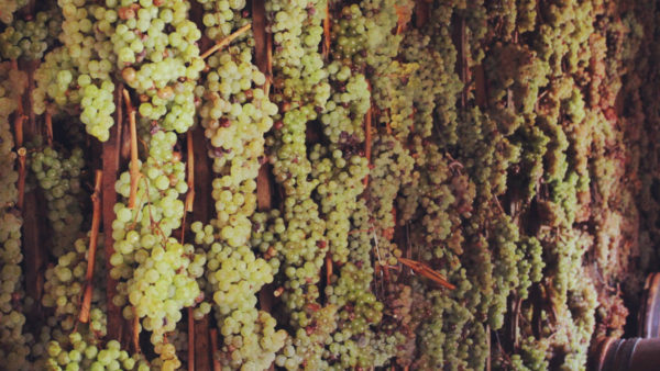 Drying grapes for Vin Santo